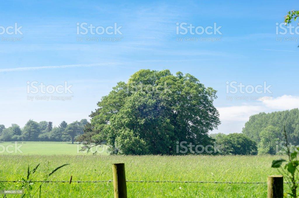 Een eik buiten een prikkeldraad hek op het platteland van weelderige zomer - Royalty-free Achtergrond - Thema Stockfoto