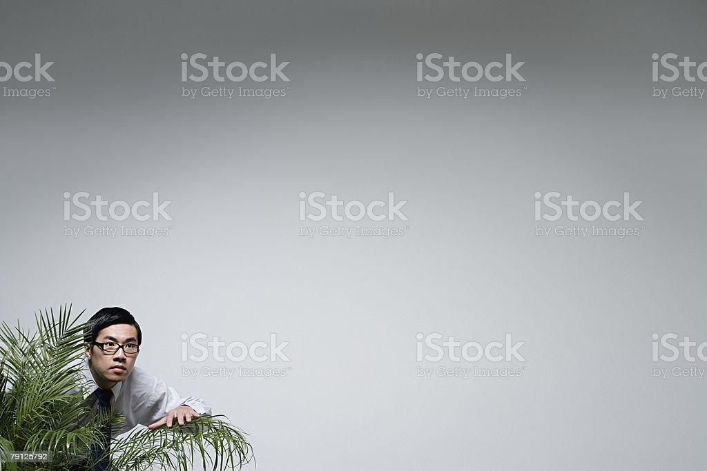 An office worker peeking through a plant 免版稅 stock photo