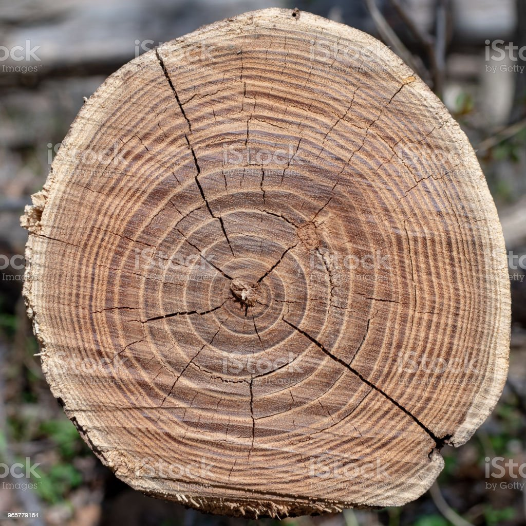 An old brown tree cut down in the woods - Стоковые фото Без людей роялти-фри