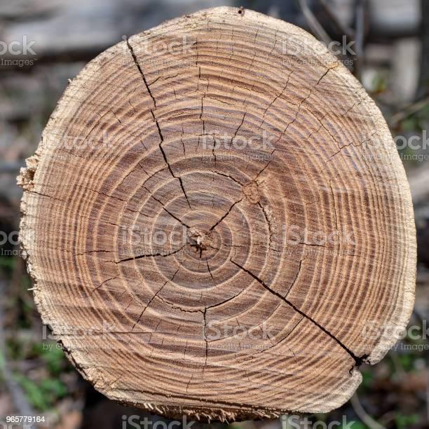 Старое Коричневое Дерево Вырубленное В Лесу — стоковые фотографии и другие картинки Без людей