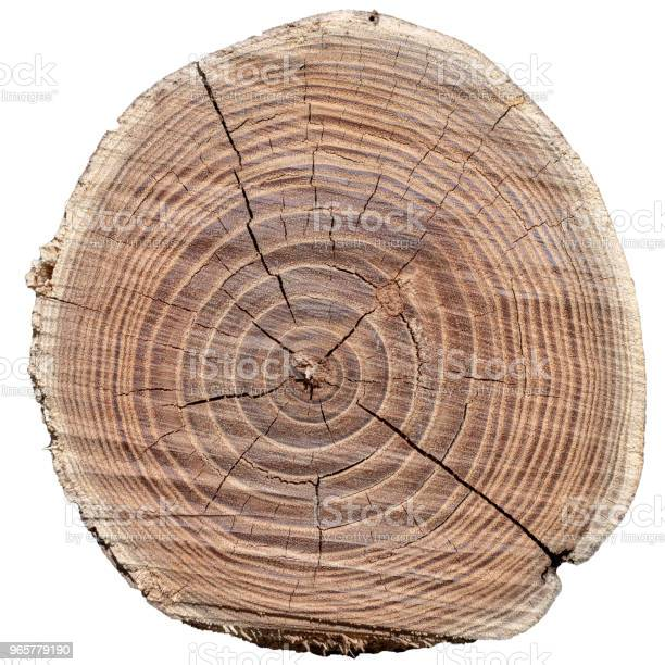 An Old Brown Tree Cut Down In The Woods — стоковые фотографии и другие картинки Без людей