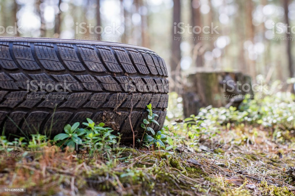 An Old Car Tire Left In The Forest Littered With The Natural