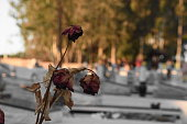 An old flower on a grave