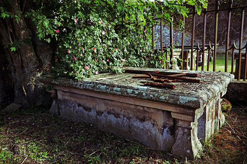 An old grave under a rosebush in a cemetery