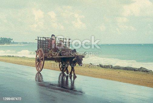 Negombo, Sri Lanka - September 15, 1993: An old man and a boy are riding an ox cart on the road along Negombo beach in Sri Lanka. Retro film capture.