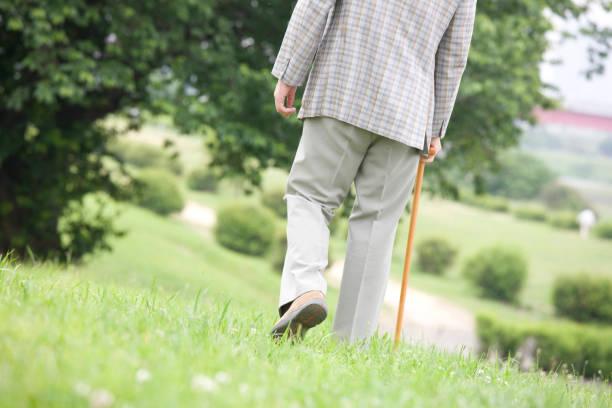 en gammal man går med käpp park tillbaka - single pampas grass bildbanksfoton och bilder