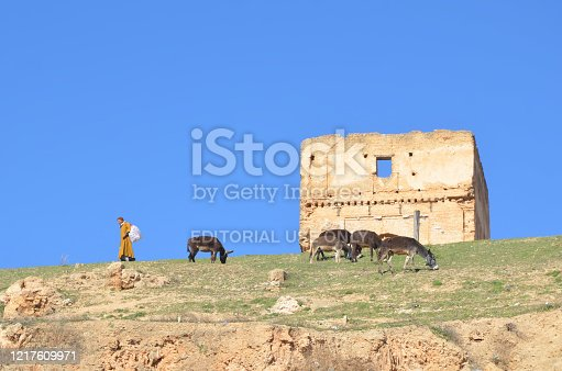 istock An old man with his donkey on the hill of Fes. 1217609971