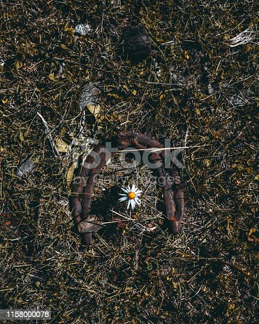 istock An old rusty horseshoe and chamomile 1158000078