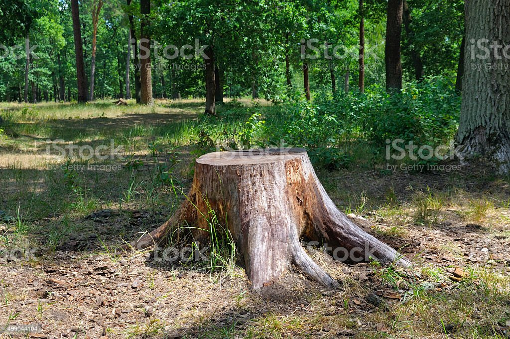 an old stump in the summer park stock photo