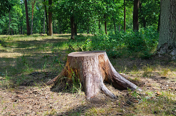 an old stump in the summer park - boomstronk stockfoto's en -beelden
