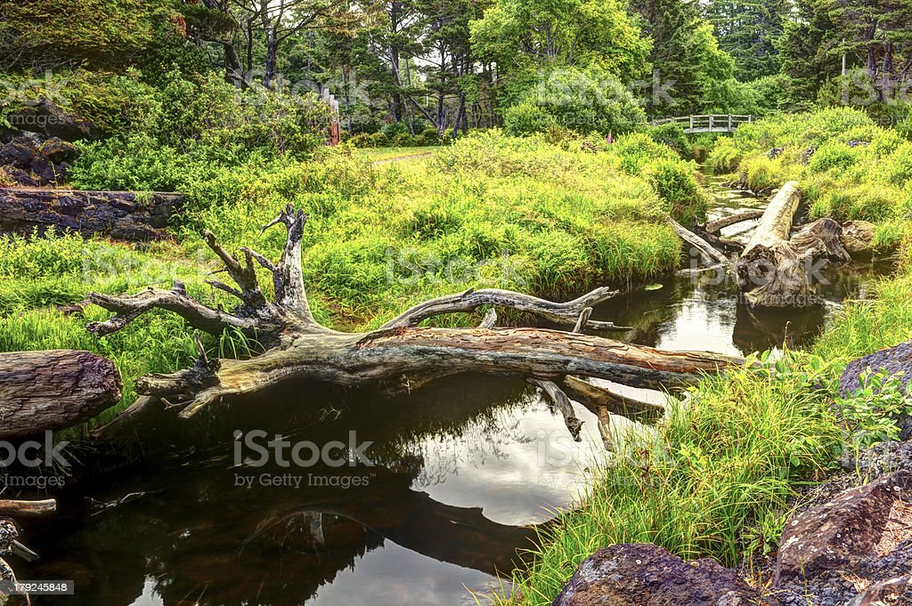 An old tree trunk lays across small river royalty-free stock photo
