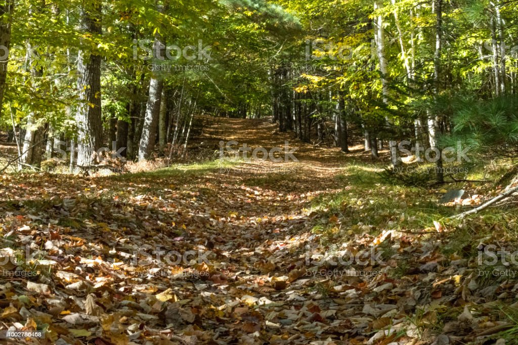 An old woods road covered in fallen leaves. stock photo