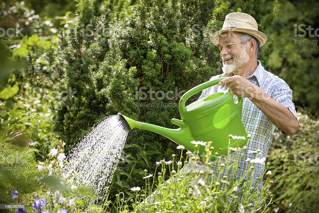 An older man with beard and hat watering his garden stock photo
