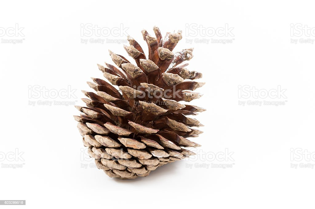 An open pinecone sprinkled with snow on a white background. stock photo