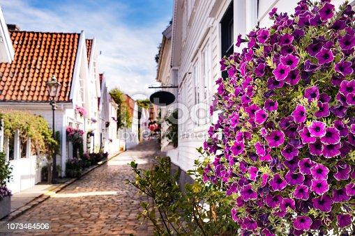 Lavander pansies flowers outdoors at the city center of Stavanger, Norway.