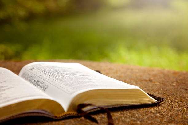 eine geöffnete bibel auf einem tisch in einem grünen garten - bible stock-fotos und bilder