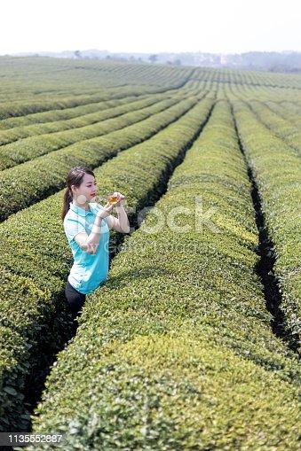 An oriental girl at the tea plantation