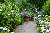 An ornate garden path bordered by white and pink flowering roses complete with wooden bench.