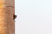An owl perched in a hole in an ancient column in Palmyra, Syria. Photo taken at sunset.
