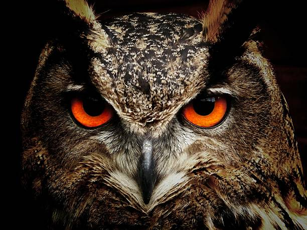 an owl - owl stock photos and pictures