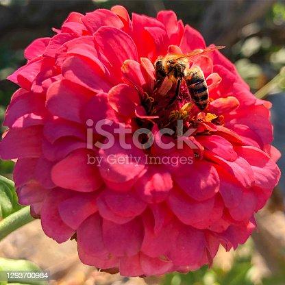 An red flower in the Flower Garden