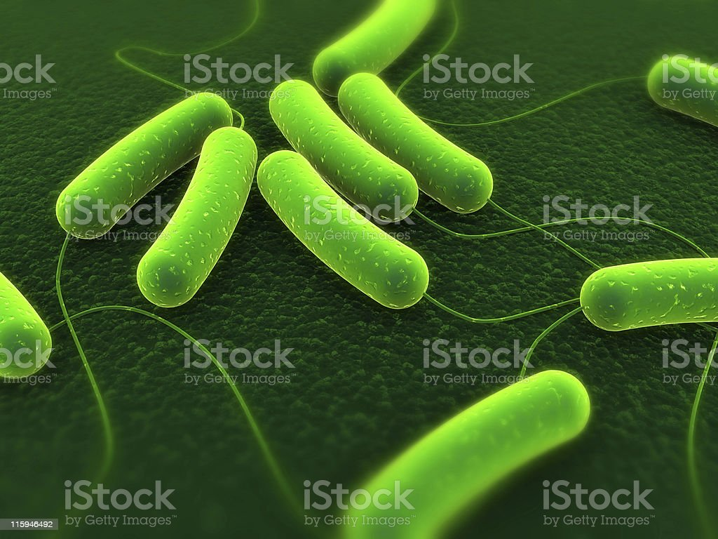 An up close picture of coli bacteria stock photo