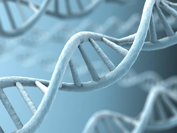 an up close picture of dna strands - chromosoom stockfoto's en -beelden