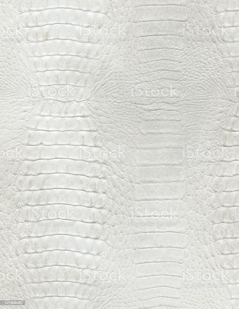 An up close picture of white crocodile leather stock photo