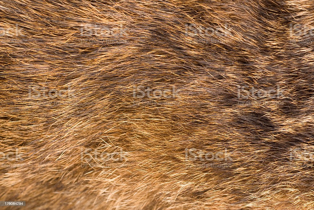 An up close view of fluffy animal fur royalty-free stock photo