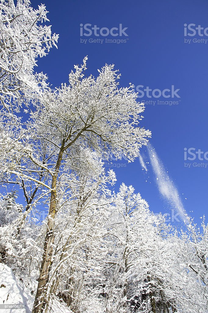 An upwards shot of a frosted up tree on a clear winter day royalty-free stock photo
