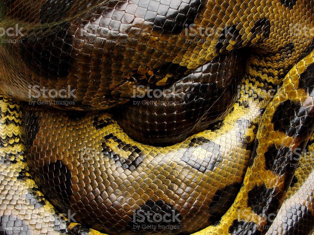 Anaconda Scales stock photo