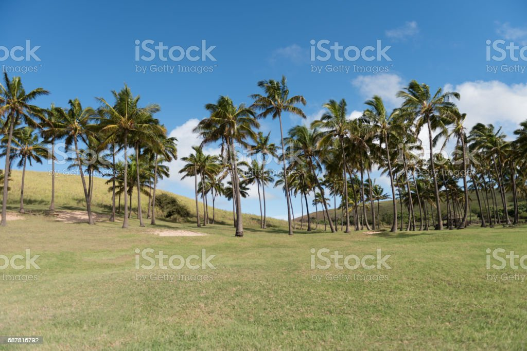 Anakena Beach, Easter Island, South Pacific stock photo