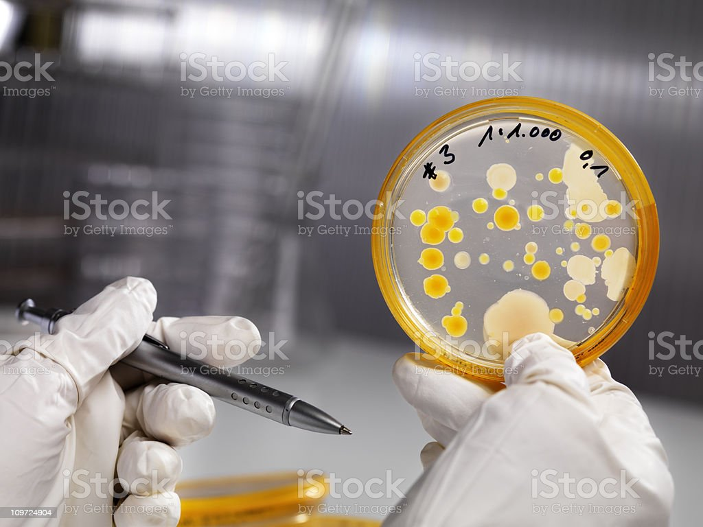 Analyzing bacteria culture at laboratory royalty-free stock photo