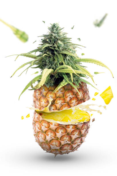 Ananas fruit explosion with marijuana - foto stock