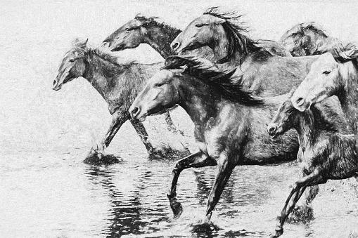 Herd of wild horses running in Turkey