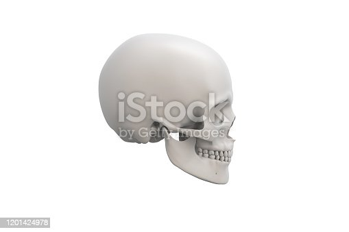 Clean anatomical skeleton illustration over a white background. Skull close-up. 3D render.