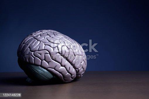 Human brain model resting on a desk.