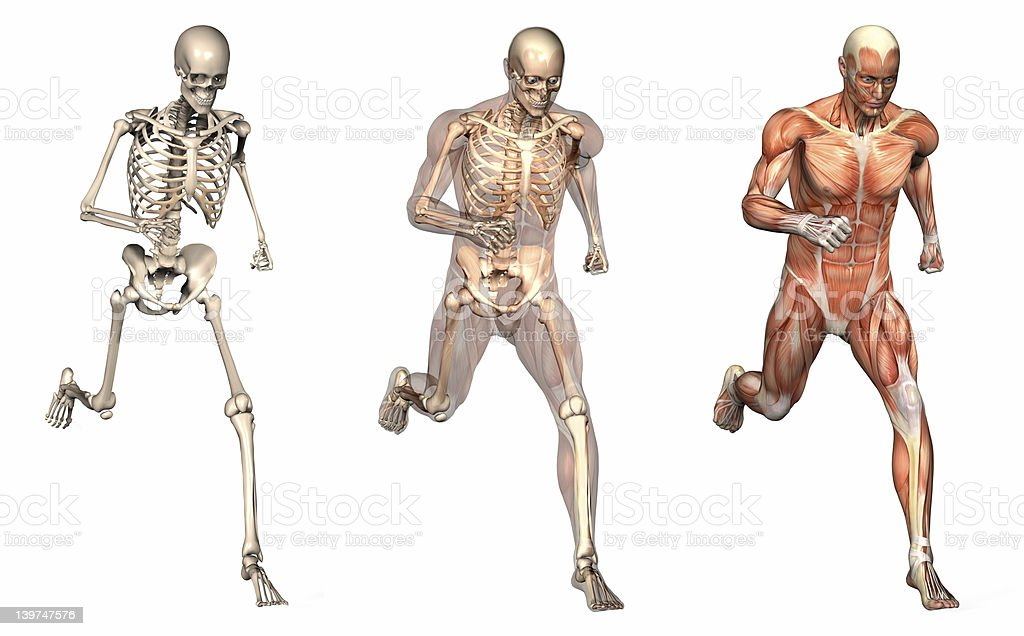 Anatomical Overlays - Man Running Front View stock photo