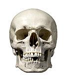 istock Anatomically correct medical model of the human skull 155008972
