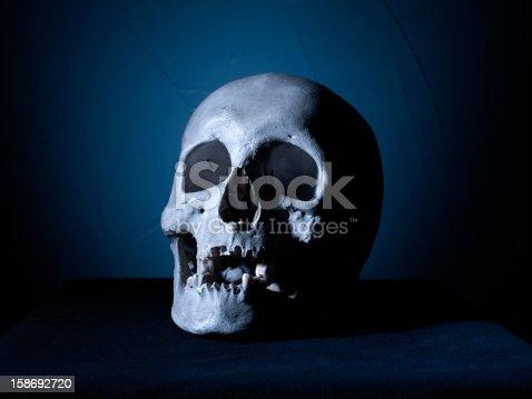 Anatomically correct medical model of the human skull