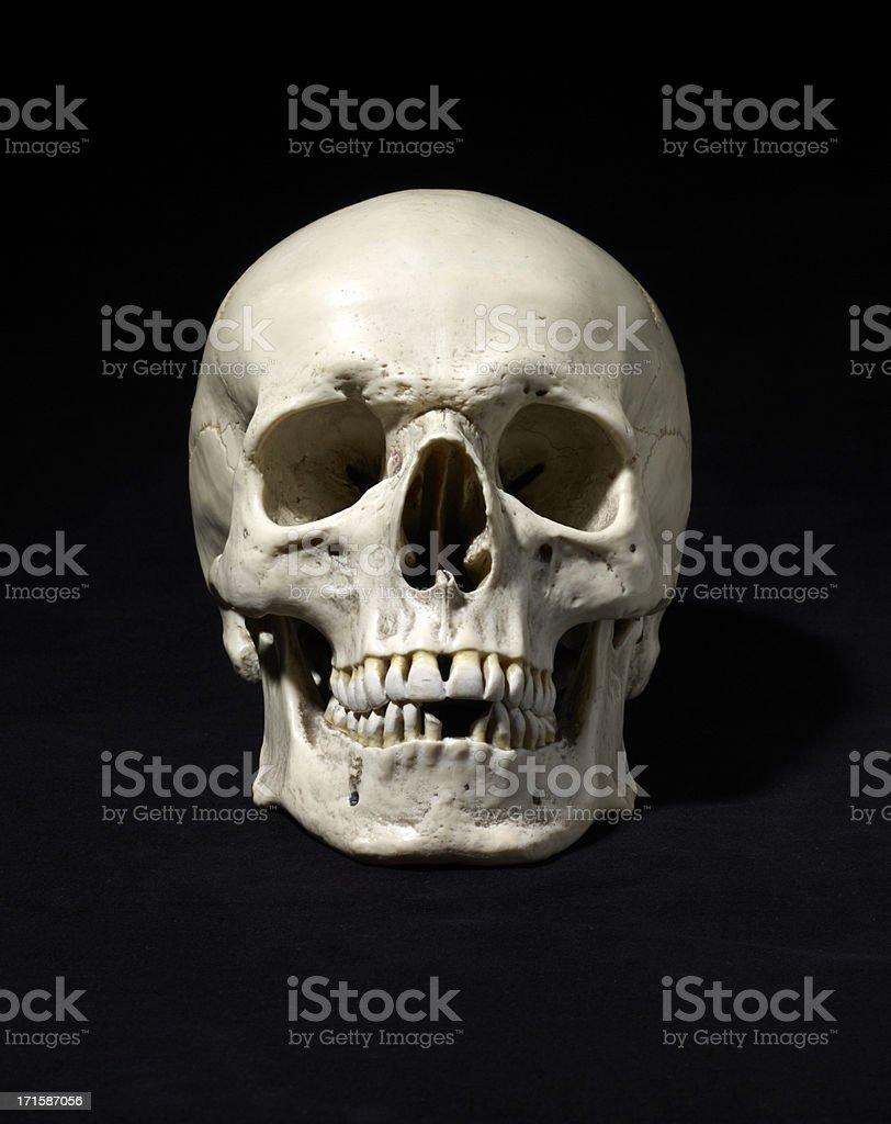 Anatomically Correct Medical Model Of The Human Skull Stock Photo ...
