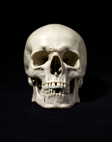 Anatomically correct medical model of the human skullPlease see some similar pictures from my portfolio: