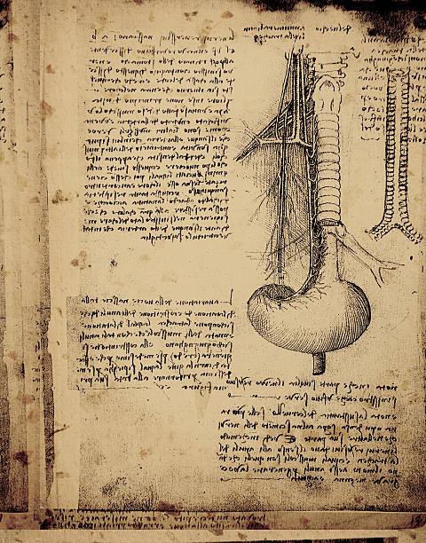 anatomie art - anatomie buch stock-fotos und bilder