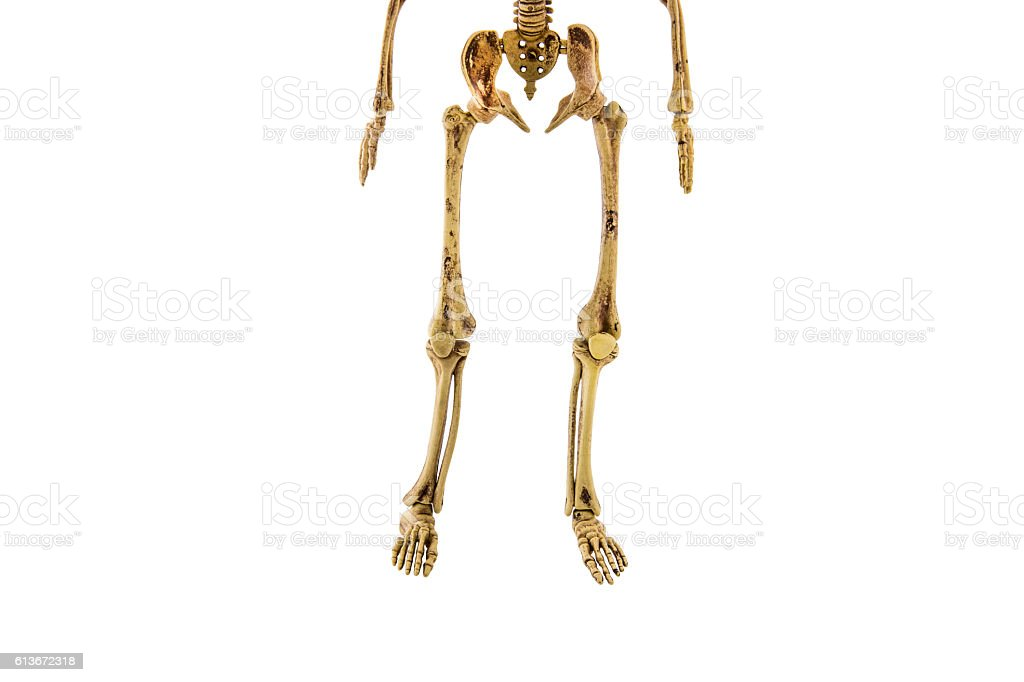Anatomy Back Lower Body Human Skeleton Isolated Stock Photo More