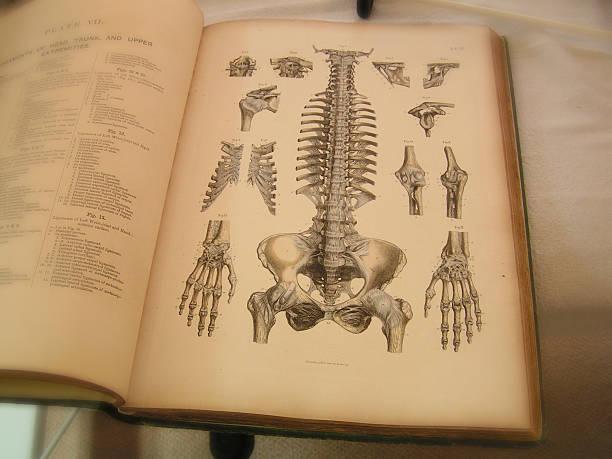 anatomie buchen - anatomie buch stock-fotos und bilder