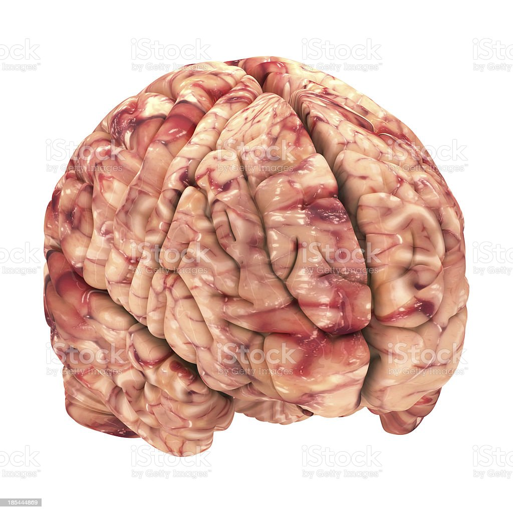 Anatomy Brain - Iso View Isolated on White royalty-free stock photo