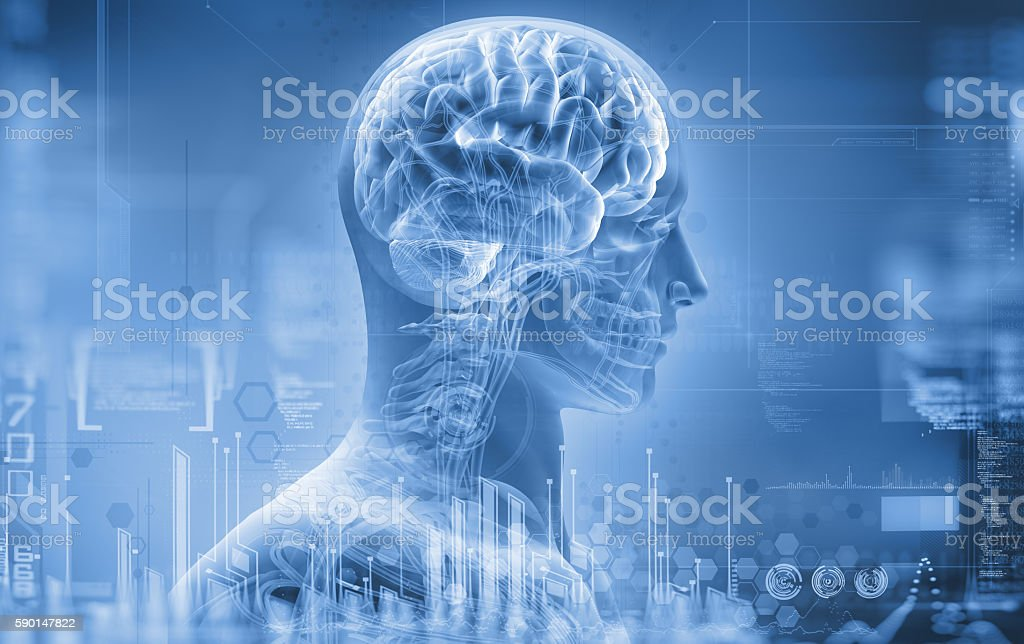 anatomy, brain, x-ray - foto de stock