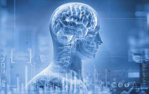 anatomy, brain, x-ray stock photo