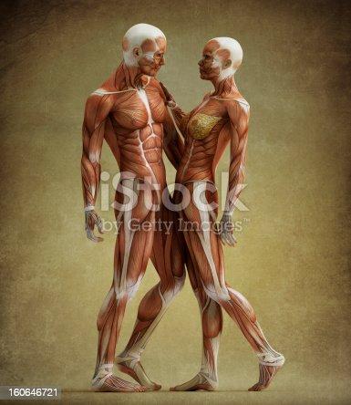 istock anatomy couple 160646721