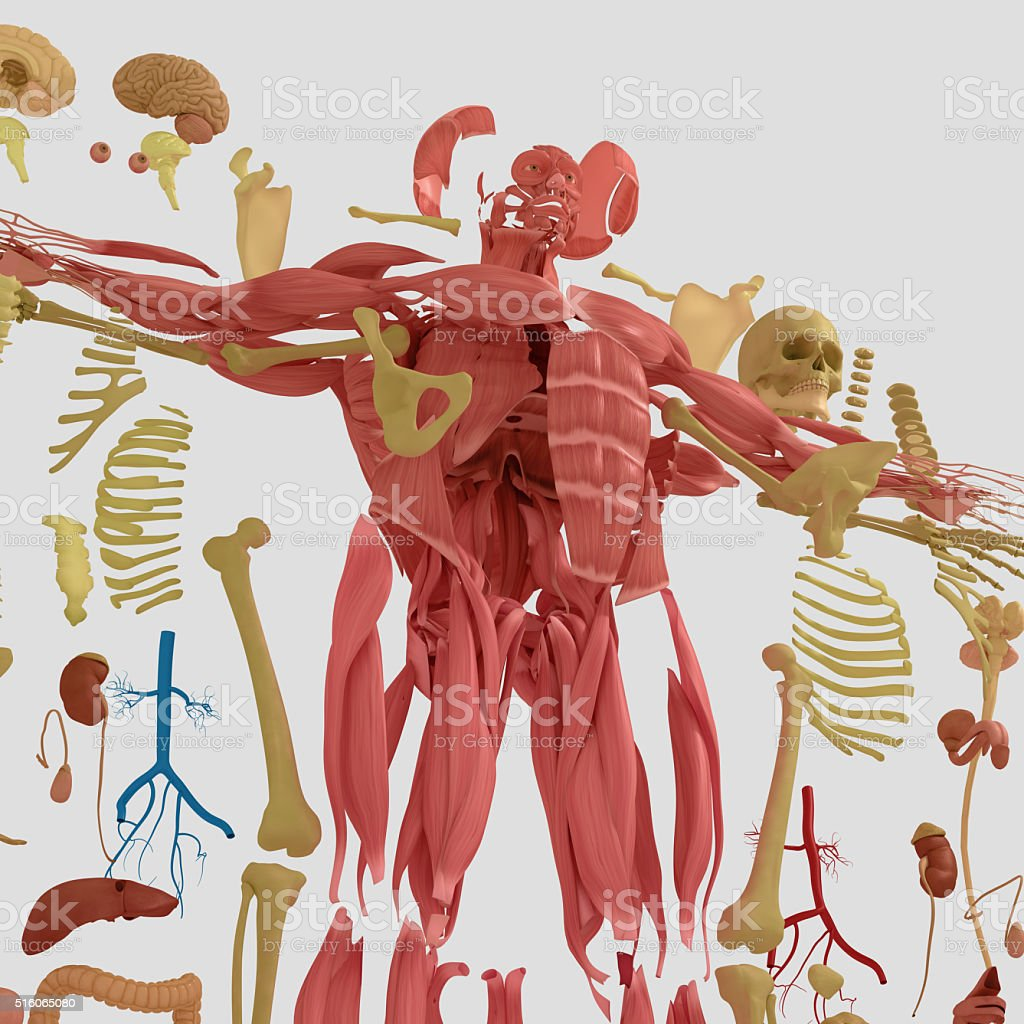 Anatomy Exploded View Deconstructedcreative Color Palettes And ...